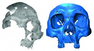 Marokotik ekarritako burezurra, ·3D modura erreproduzitua. Senkerberg Museoa (Frankfurt). (Argazkia: Harvati et al.)
