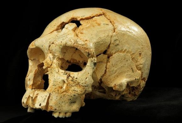 4.Sima de los Huesos (Atapuerca) izenekoan aurkitutako 17. burezurra. Argazkilaria: Javier Trueba-Madrid Scietific Films.