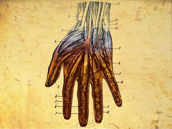 giza anatomia atlasa euskaraz