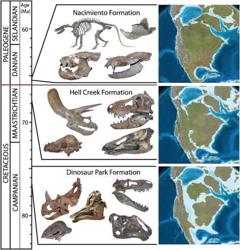 1. irudia: Dinosauroen garezurren eta beste hezurdura batzuen irudikapena, Ipar Amerikan bildutako fosiletatik abiatuta.