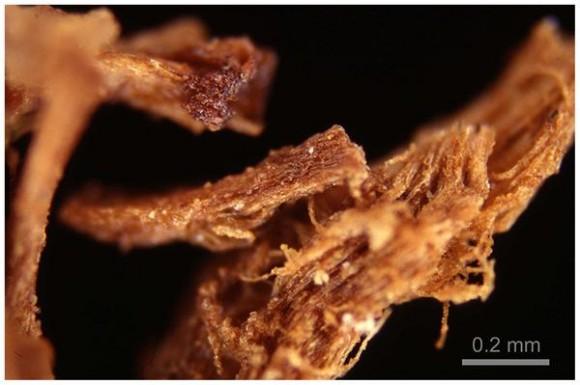 """2. irudia: """"Erretxina"""" karamelizatuaren irudirik sinesgarriena. Irudia bereizmen handiko argidun mikroskopio optikoaz atera zen. Argazkia: Jones et al (2014)"""