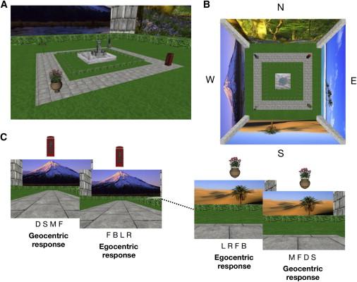 1. irudia: Esperimentuan erabilitako simulazioaren irudiak. (Argazkia: Chadwick, Martin J. et al.)