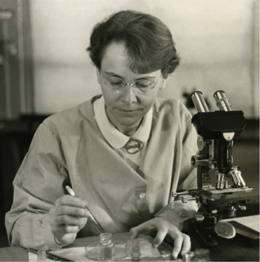 3. irudia: Barbara McClintock bere mikroskopioarekin lanean. Smithsonian Institution (Flickr: Barbara McClintock (1902-1992)), via Wikimedia Commons bidez.)