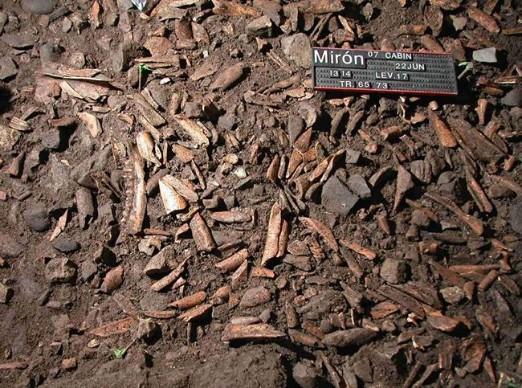 1. irudia: Huesos de ciervo en la cueva del Mirón. (Argazkia: UC)