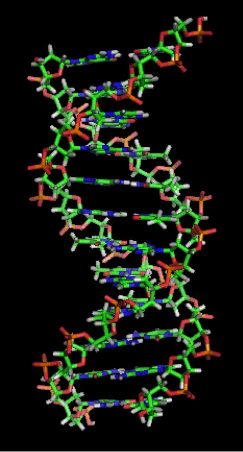 4. irudia: Helize bikoitza. Zephyrisek egina. (Argazkia: CC BY-SA 3.0 lizentziapean, Wikimedia Commons bidez.)