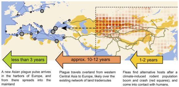 1. irudia: Izurrien Asiatik Europarako bidea islatzen duen grafikoa. (Argazkia: Nils Stenseth)