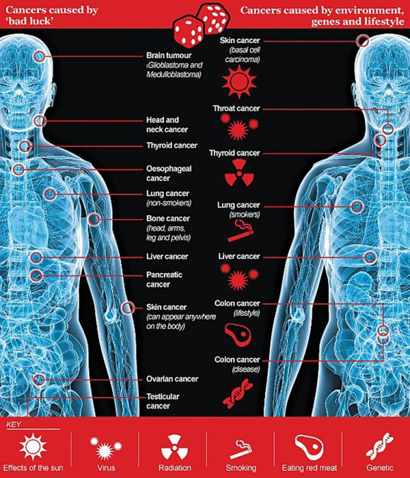 """1. irudia: El diario británico Telegraph elaboró una infografía separando los tipos de cáncer por su origen. Producidos por """"mala suerte"""": cerebral, cabeza y nuca, esófago, pulmonar en no fumadores, óseo, hígado, páncreas, piel, ovarios y testicular. Originados en conductas y genes."""