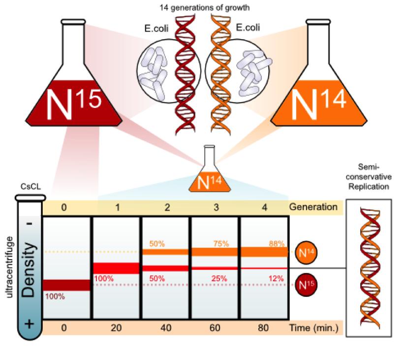 Genetikaren ibilbidea (V): Informazioa maneiatzen