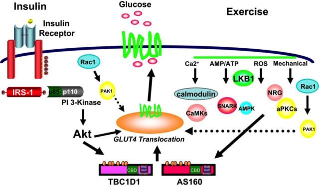 glukosa eta diabetesa 2