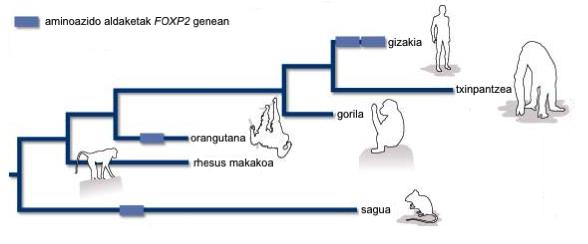 hizkuntza eta eboluzioa 5