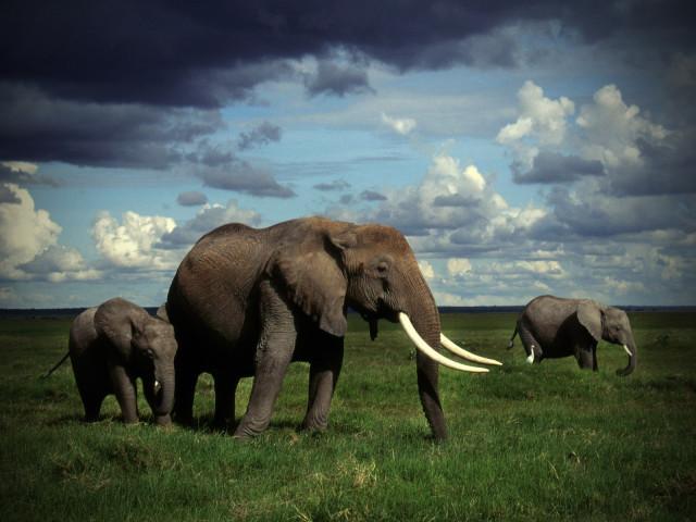 elefanteak eta LSDa