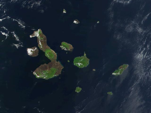 2. irudia: Galapagoen inguruan bizi diren kaxaloteekin egin dute ikerketa hau. (Argazkia: Jacques Descloitres/NASA-GSF)