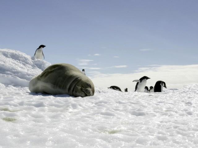 Irudia: Homeotermoek, beren gorputzen tenperatura konstante mantentzen dute.