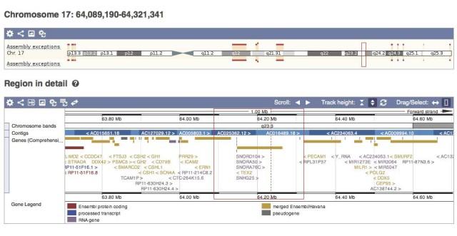 2. irudia: ENCODE egitasmoak proteina-gene ez diren transkripto mota desberdin ugari aurkitu ditu. Irudian, 17. kromosomaren 64.089.190-64.321.341 tartean identifikatutako gene desberdinak, EMBL eta Sanger Institutuak sortutako ensembl nabigatzaile genomikoan (http://www.ensembl.org); urre kolorez proteina ekoizten dutenak, morez RNA azken poroduktu dutenak, grisez transkribatzen ez diren pseudogene hilak eta gorriz ensemble plataformaren algoritmo informatikoak aurreikusitakoak.