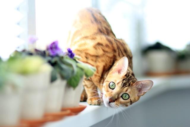 cat-877108_1280
