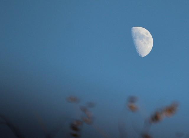 half-moon-66923_1280