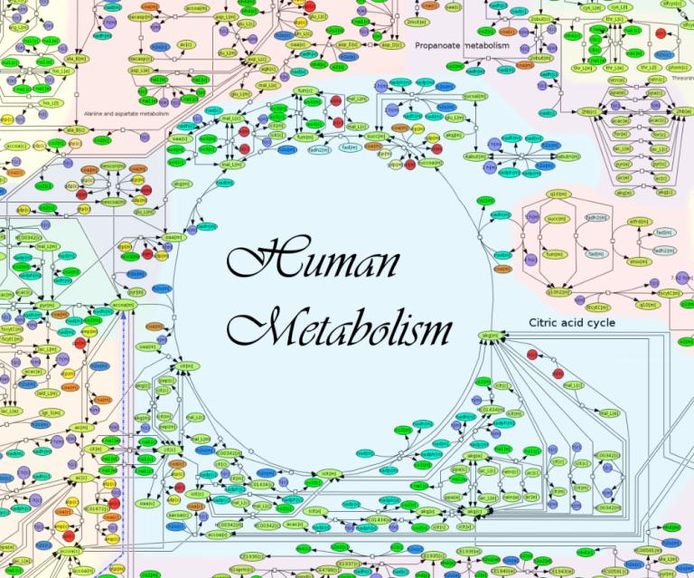 Metabolismoaz (eta II)