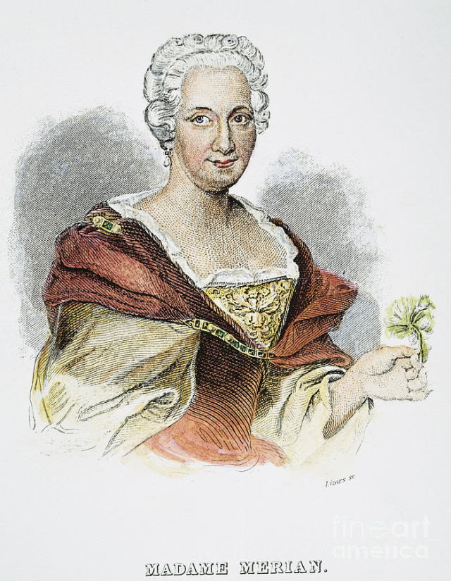 anna-maria-sibylla-merian-granger