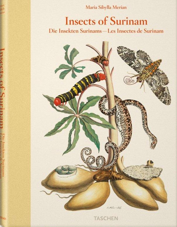 """3. irudia: Surinameko intsektuei buruzko ilustrazioak argitaratu zituen Anna Maria Sibylla Merianek: Metamorphosis insectorum surinamensium (""""Intsektuen metamorfosia Surinamen"""")."""