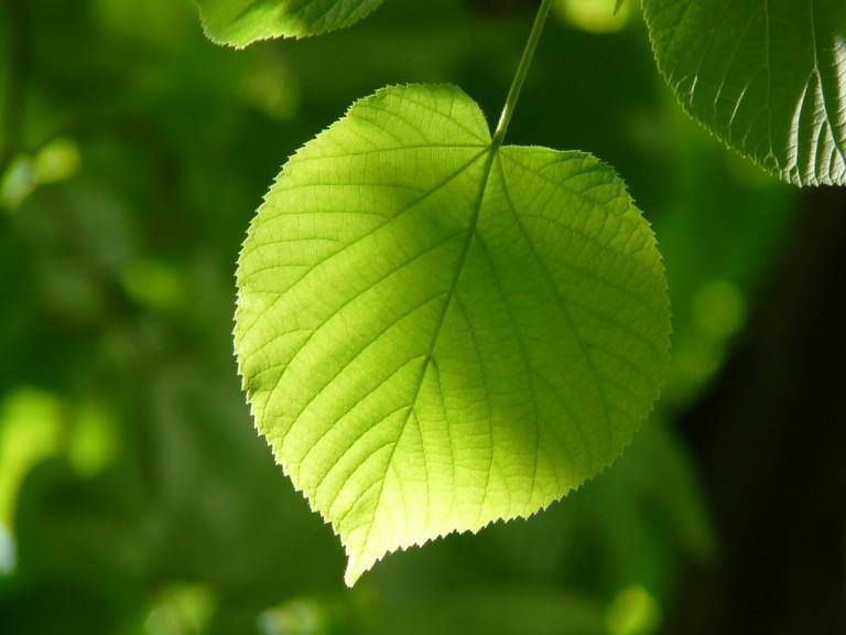 Fotosintesiaz