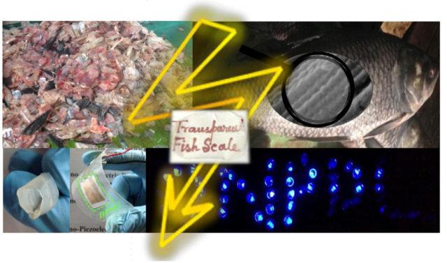 1. irudia: Ikerketa islatzen duten irudiak. Nanosorgailu malgua sortu dute arrainen hondakinetatik abiatuta, eta harekin 50 LED argi baino gehiago piztu daitezkeela egiaztatu dute. (Argazkia: Sujoy Kuman Ghosh eta Dipankar Mandal / Jadavpurko Unibertsitatea)