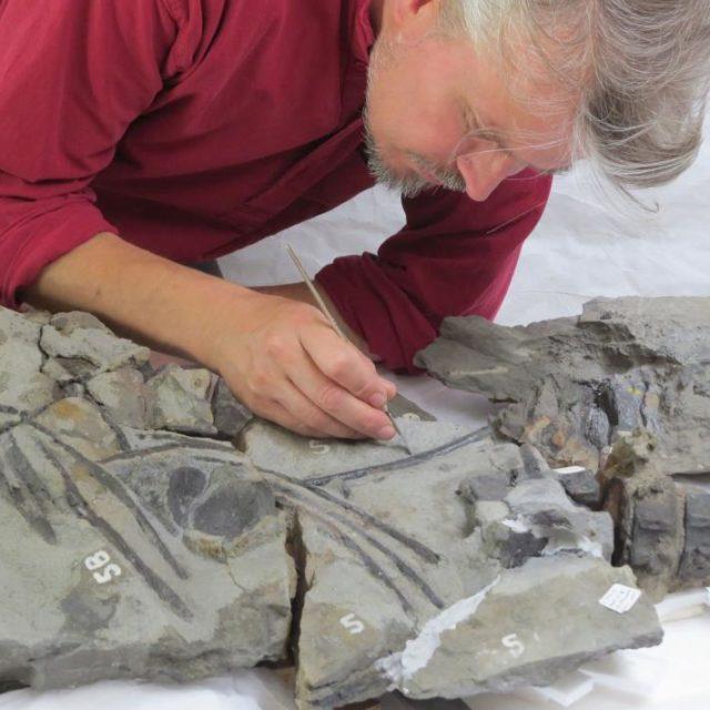 2. irudia: Mende erdi igaro eta gero, fosilarekin lan egiteari ekin diote ikertzaileek. (Argazkia: Edinburgoko Unibertsitatea)