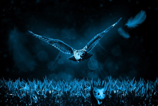 owl-517497_1280