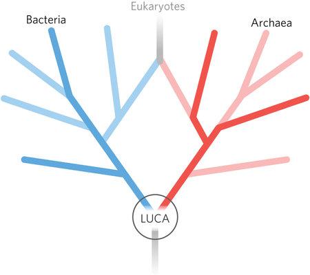 1. irudia: Bakterio eta arkeoetatik abiatu dira LUCAren balizko geneak identifikatzeko. (Argazkia: Madeline C. Weiss et al.)