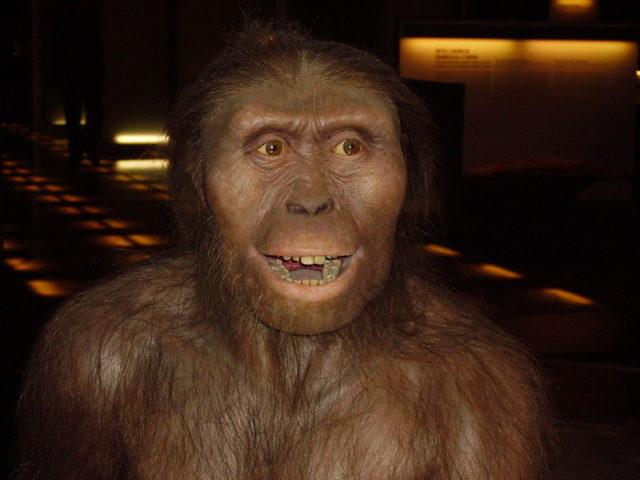 1. irudia: Australopithecus homininoak guk baino garun txikiagoa eta hortz handiagoak zituen) (Sinadura: No machine-readable source provided / CC BY-SA 3.0)