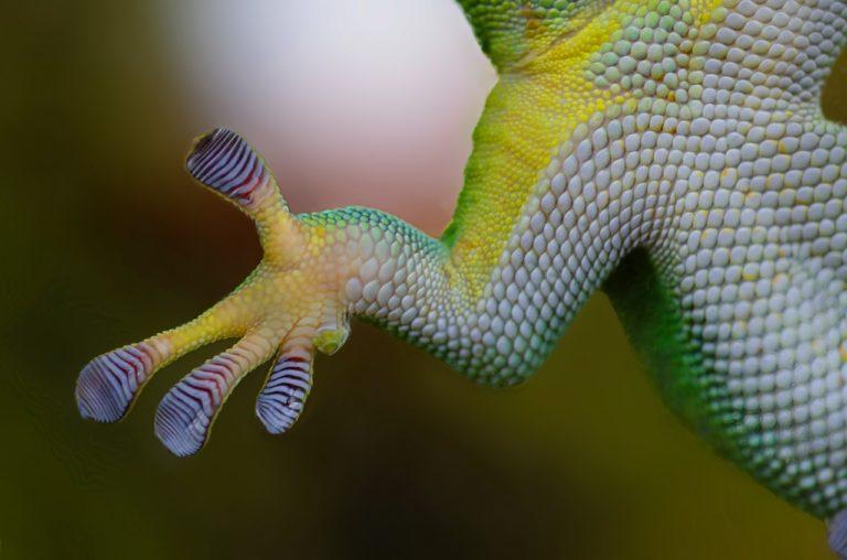 Biomimetika: natura gizakion inspirazio-iturri
