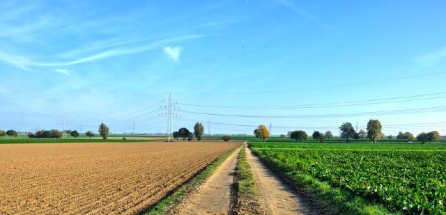 nekazaritza ekologikoa