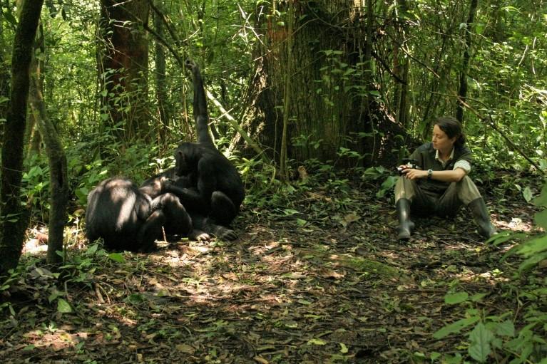 Bonobo eta txinpantzeen komunikazio-keinuak, esanahi bereko hizkera