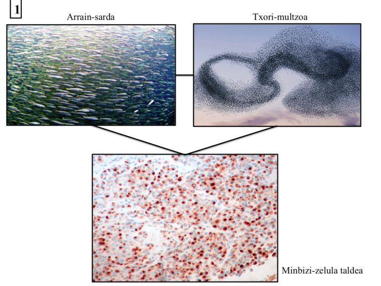 Tumore barneko heterogeneotasuna eta ekologia