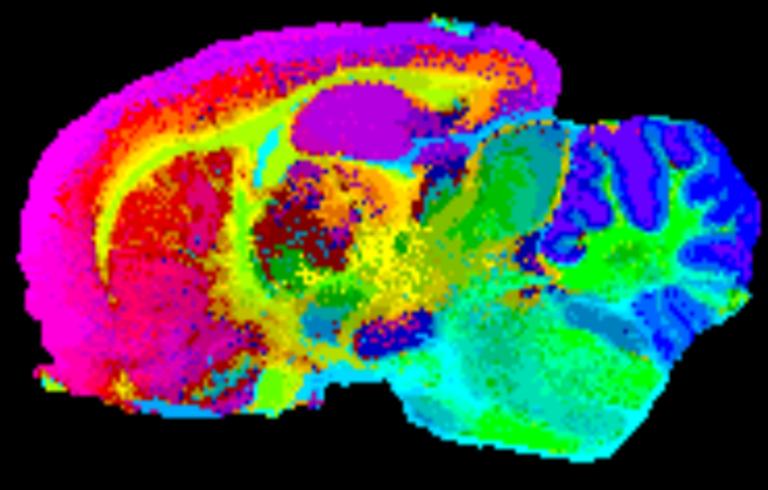 Esploratu gabe dauden lurraldeak kartografiatzen: masa-espektrometria bidezko irudia