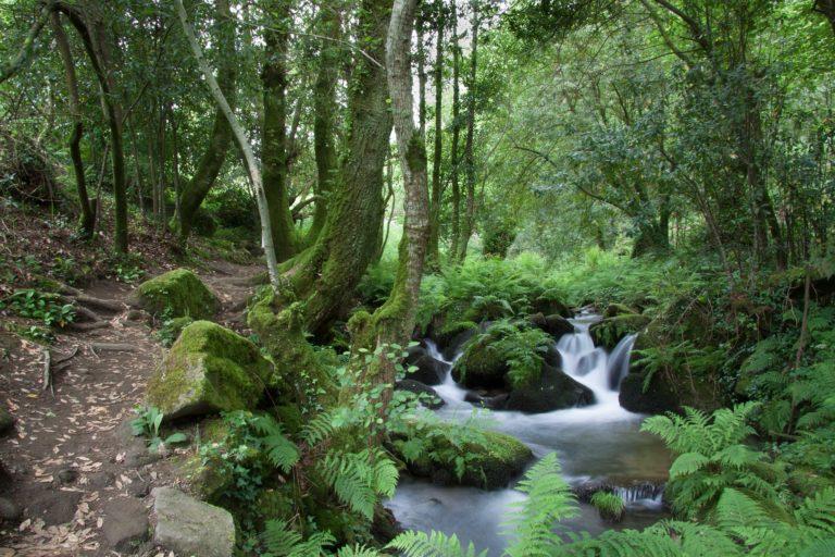 Ibaiak, biodibertsitate galera handia bizi duten ekosistemak