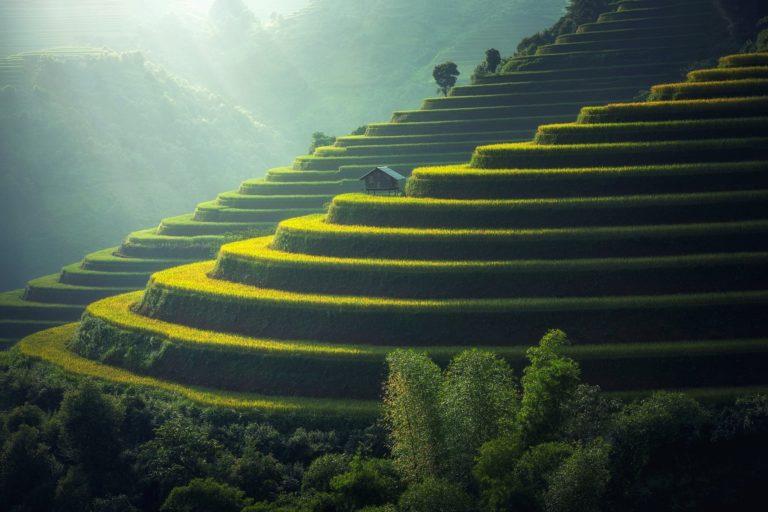 Arrozaren genomaren materia iluna, arroz-etxekotzearen argibide
