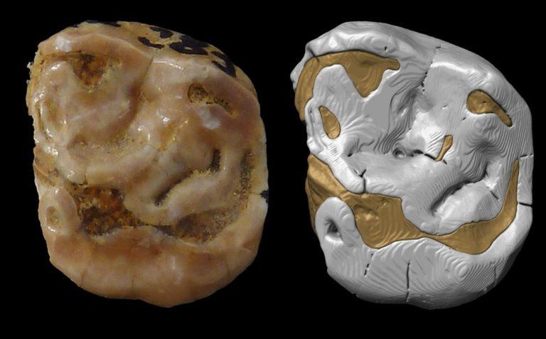 Euskal Herriko neandertal berriak (eta izateari utzi dioten batzuk)