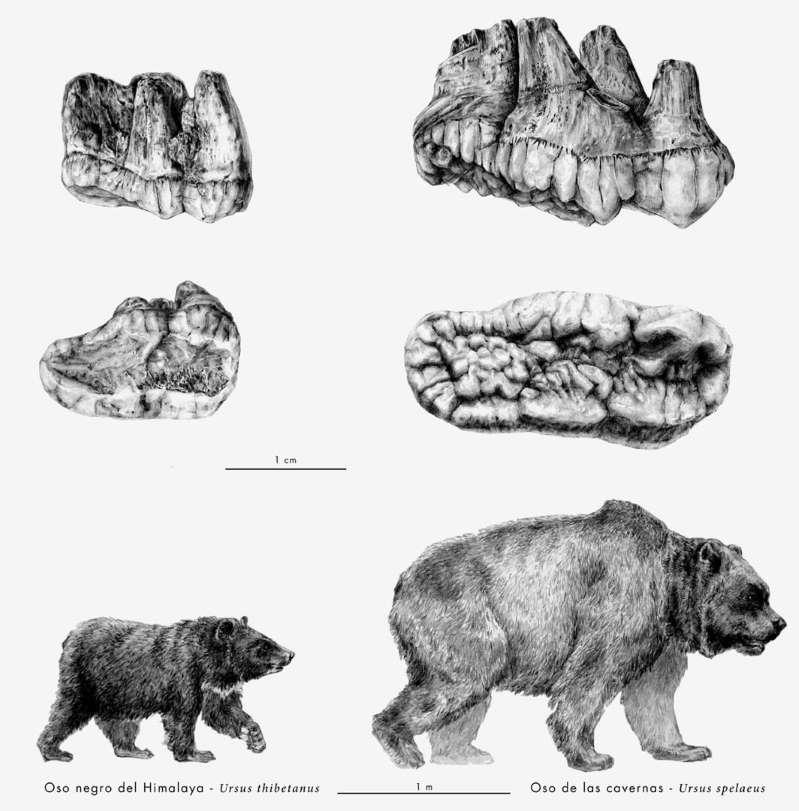 aztarna fosilak